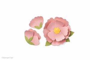 Annual16_p188_141469_Blossom-287