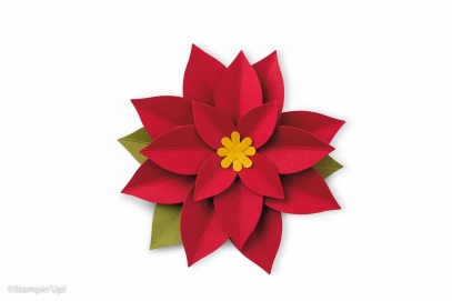 annual16_p188_139682_festive_flower-286